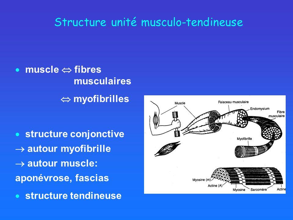 Structure unité musculo-tendineuse