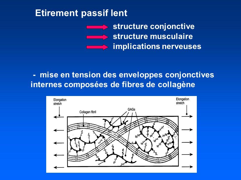 Etirement passif lent structure conjonctive structure musculaire