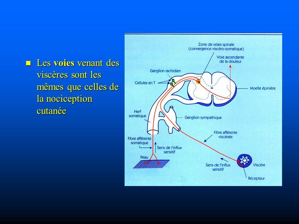 Les voies venant des viscères sont les mêmes que celles de la nociception cutanée