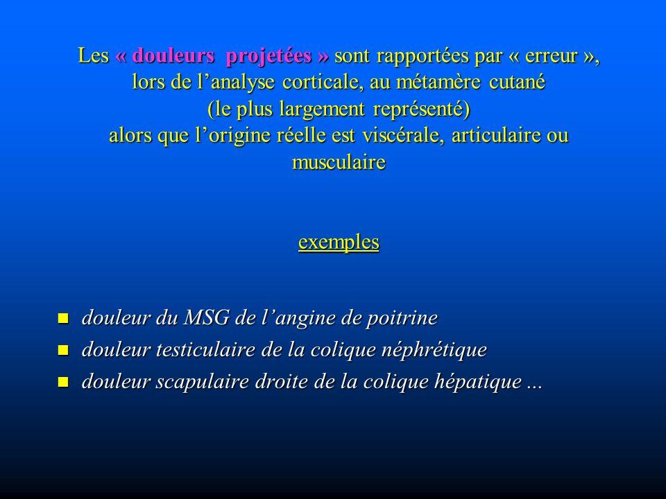 Les « douleurs projetées » sont rapportées par « erreur », lors de l'analyse corticale, au métamère cutané (le plus largement représenté) alors que l'origine réelle est viscérale, articulaire ou musculaire exemples