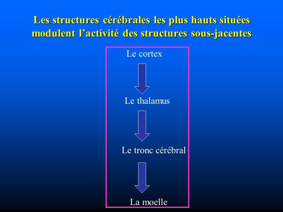 Les structures cérébrales les plus hauts situées modulent l'activité des structures sous-jacentes