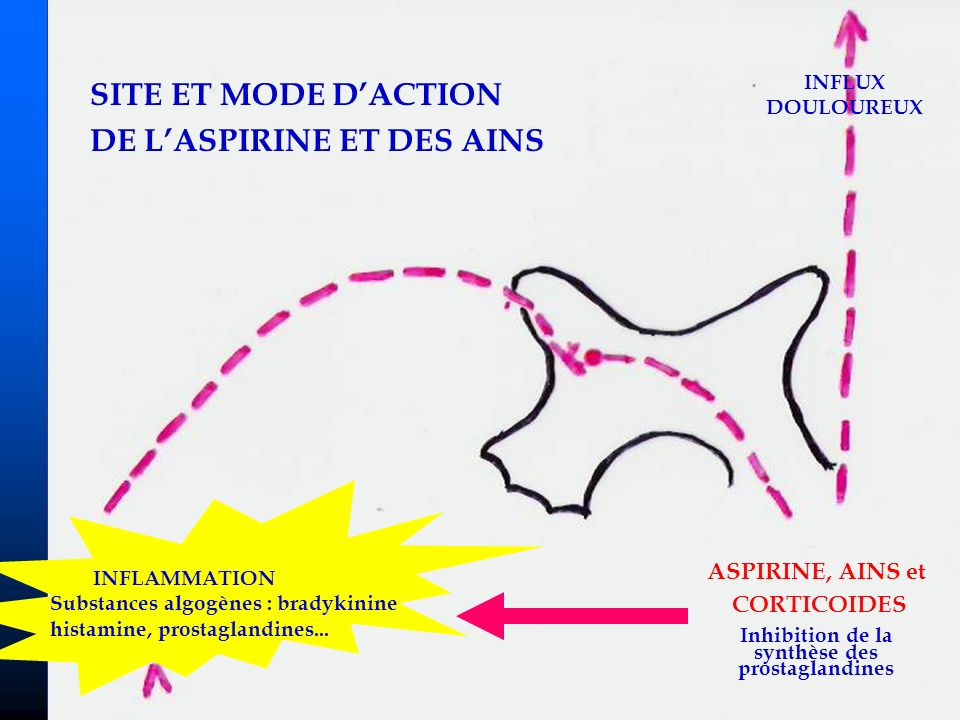 Inhibition de la synthèse des prostaglandines