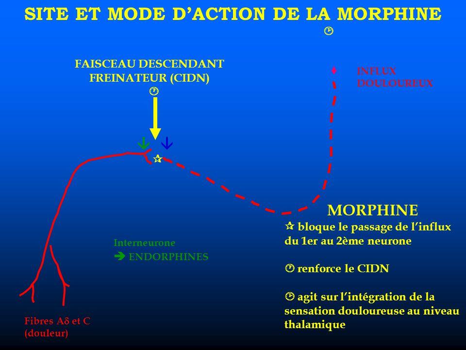 SITE ET MODE D'ACTION DE LA MORPHINE