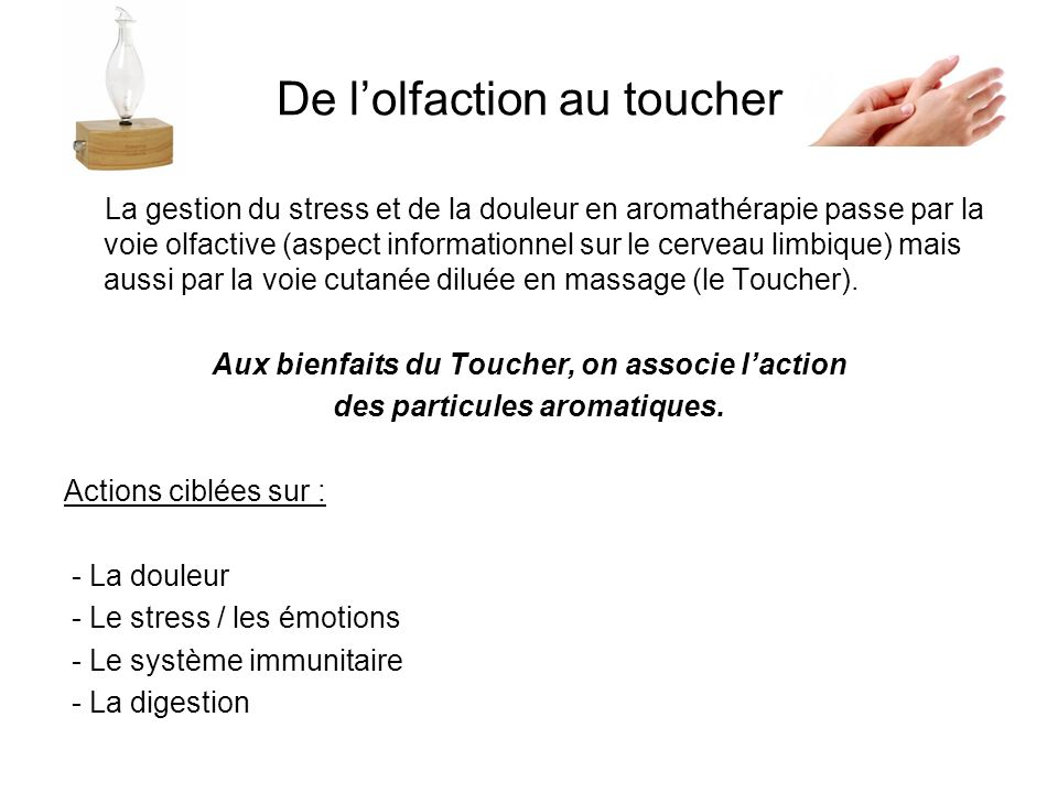 De l'olfaction au toucher