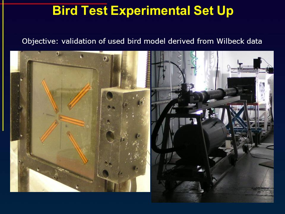 Bird Test Experimental Set Up