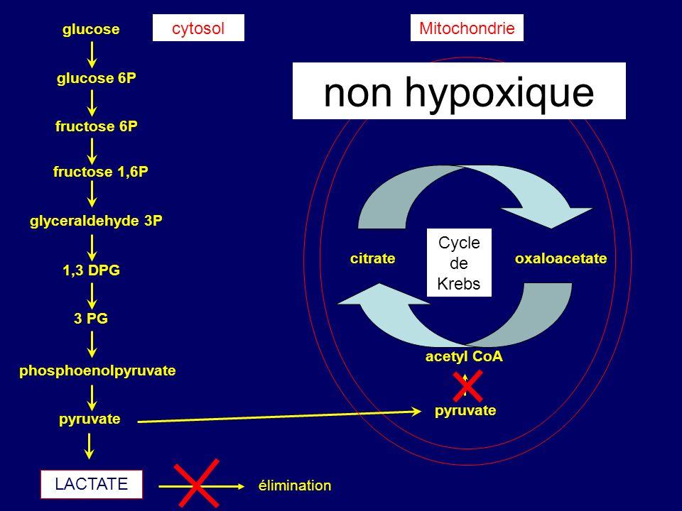 non hypoxique cytosol Mitochondrie Cycle de Krebs LACTATE glucose