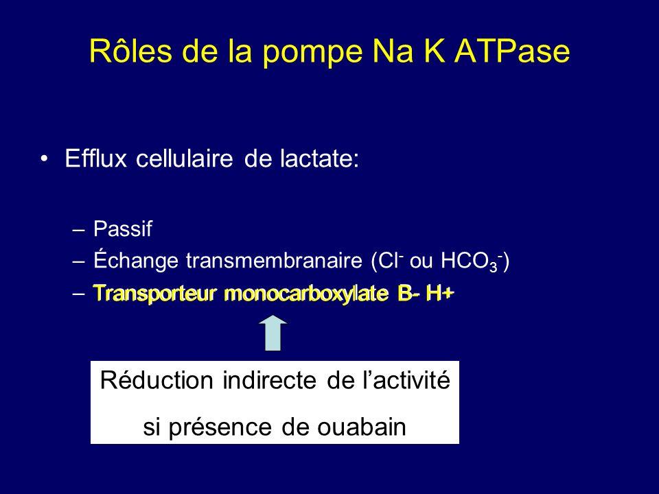 Rôles de la pompe Na K ATPase