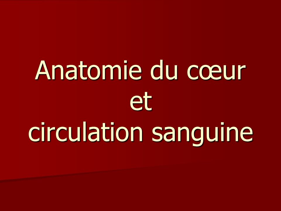 Anatomie du cœur et circulation sanguine