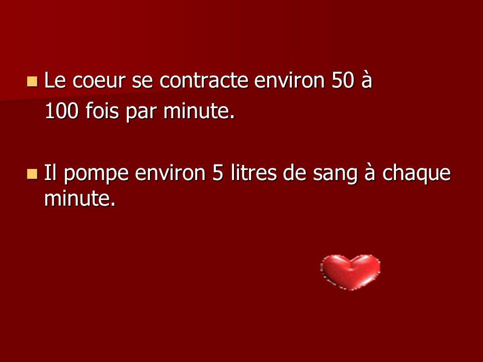 Le coeur se contracte environ 50 à 100 fois par minute.