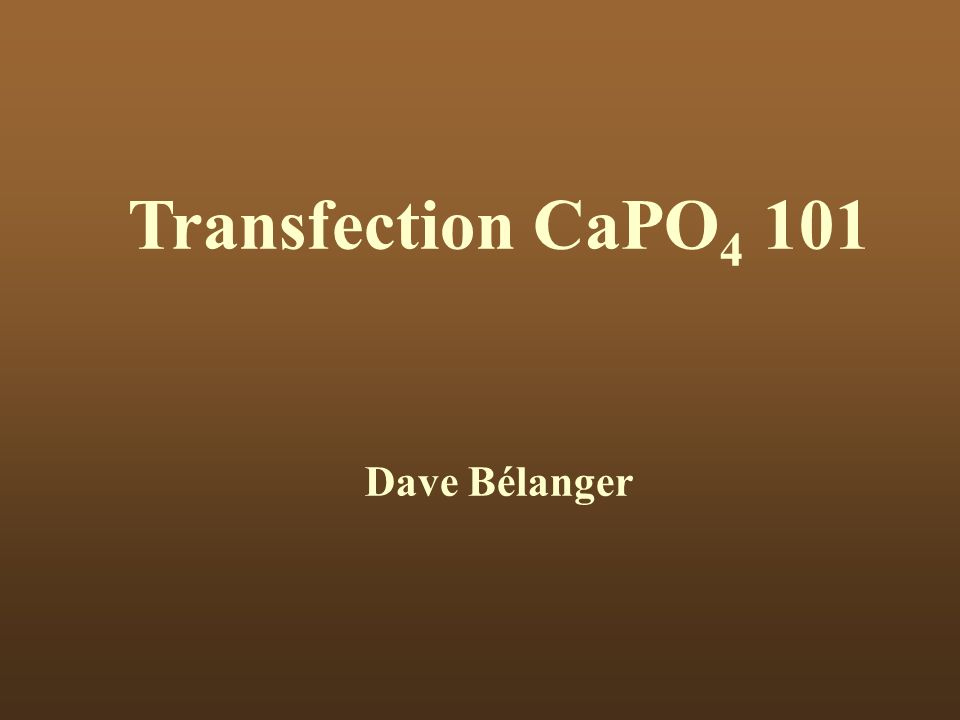 Transfection CaPO4 101 Dave Bélanger