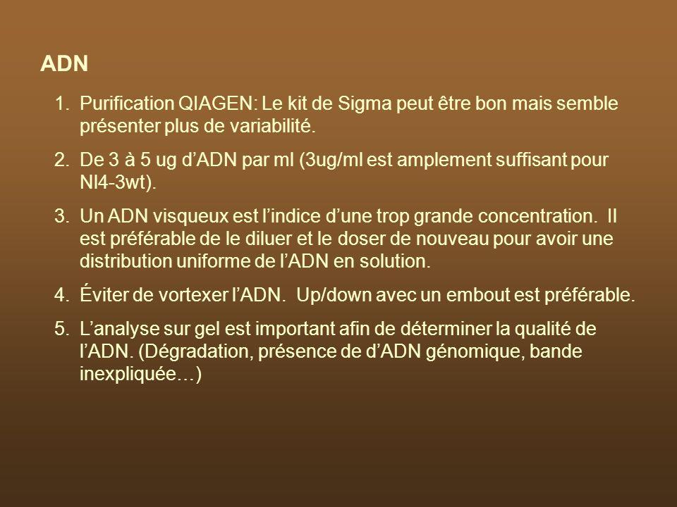 ADN Purification QIAGEN: Le kit de Sigma peut être bon mais semble présenter plus de variabilité.