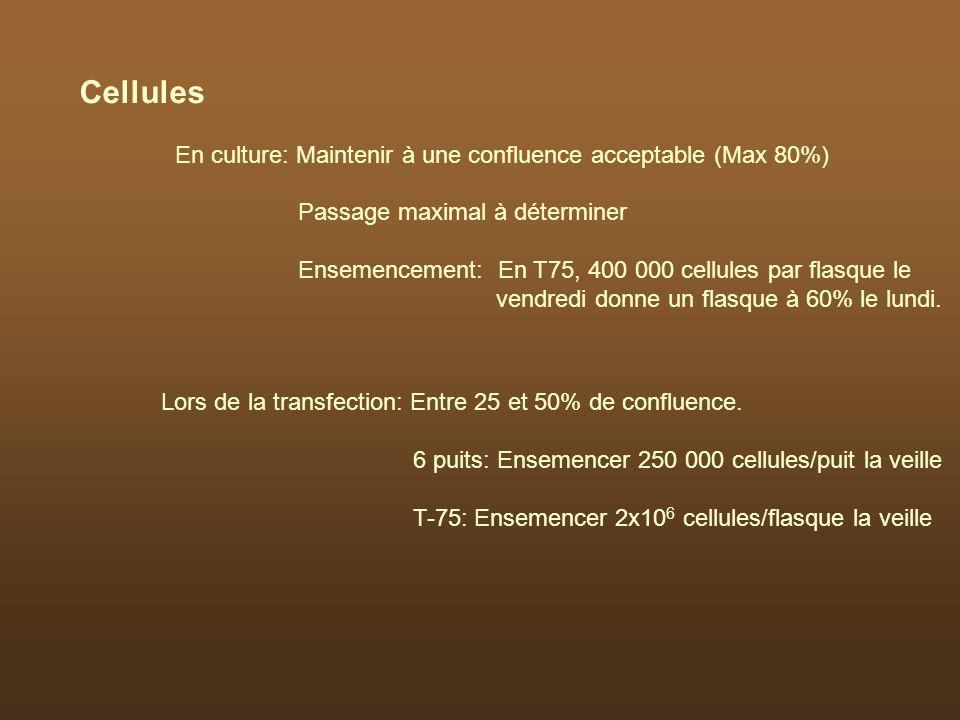 Cellules En culture: Maintenir à une confluence acceptable (Max 80%)