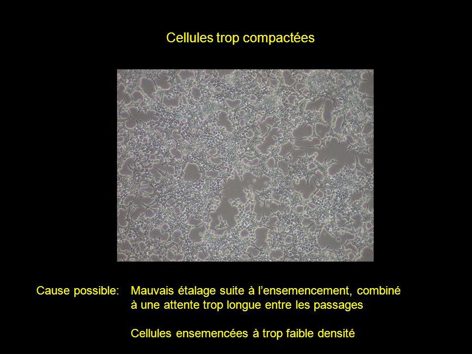 Cellules trop compactées