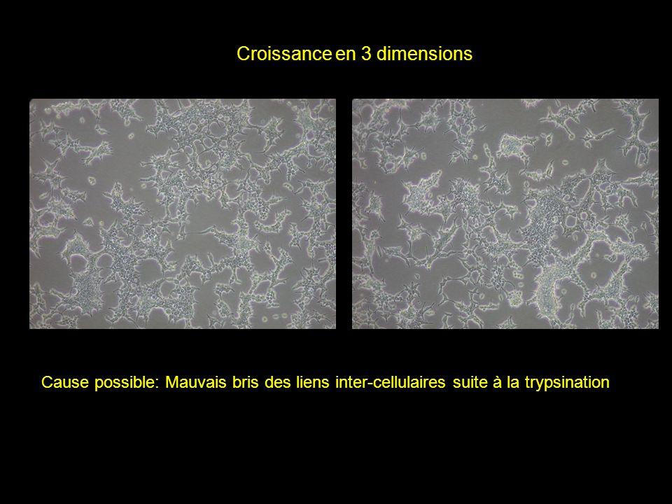 Croissance en 3 dimensions