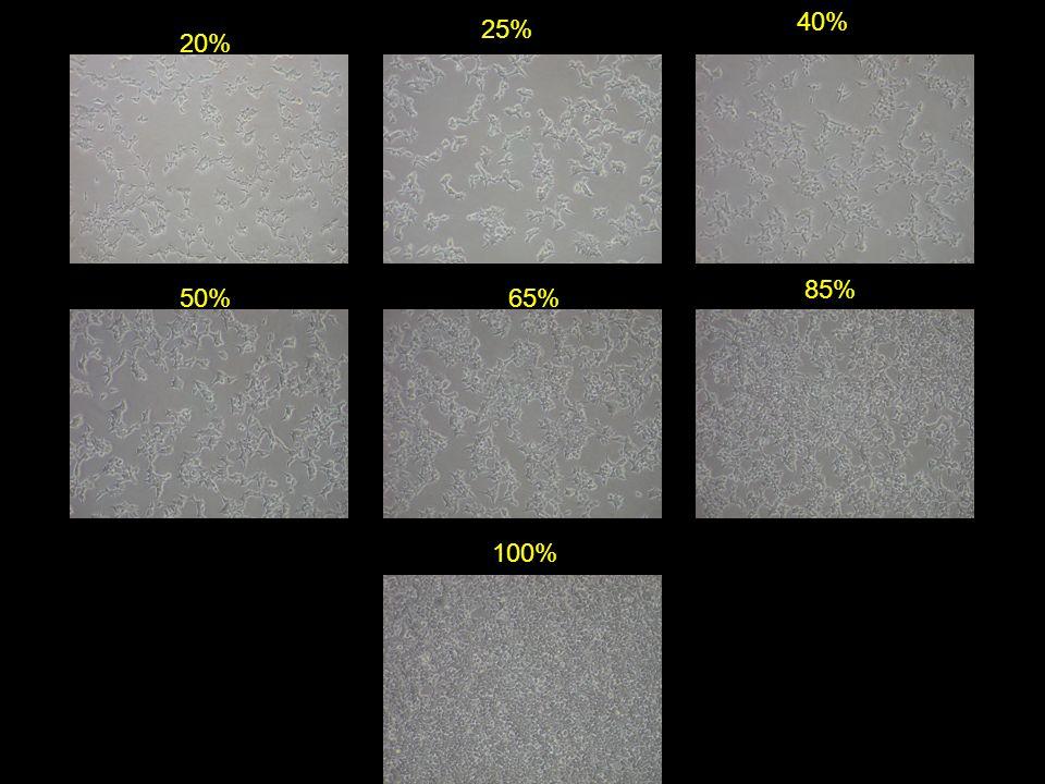 40% 25% 20% 85% 50% 65% 100%
