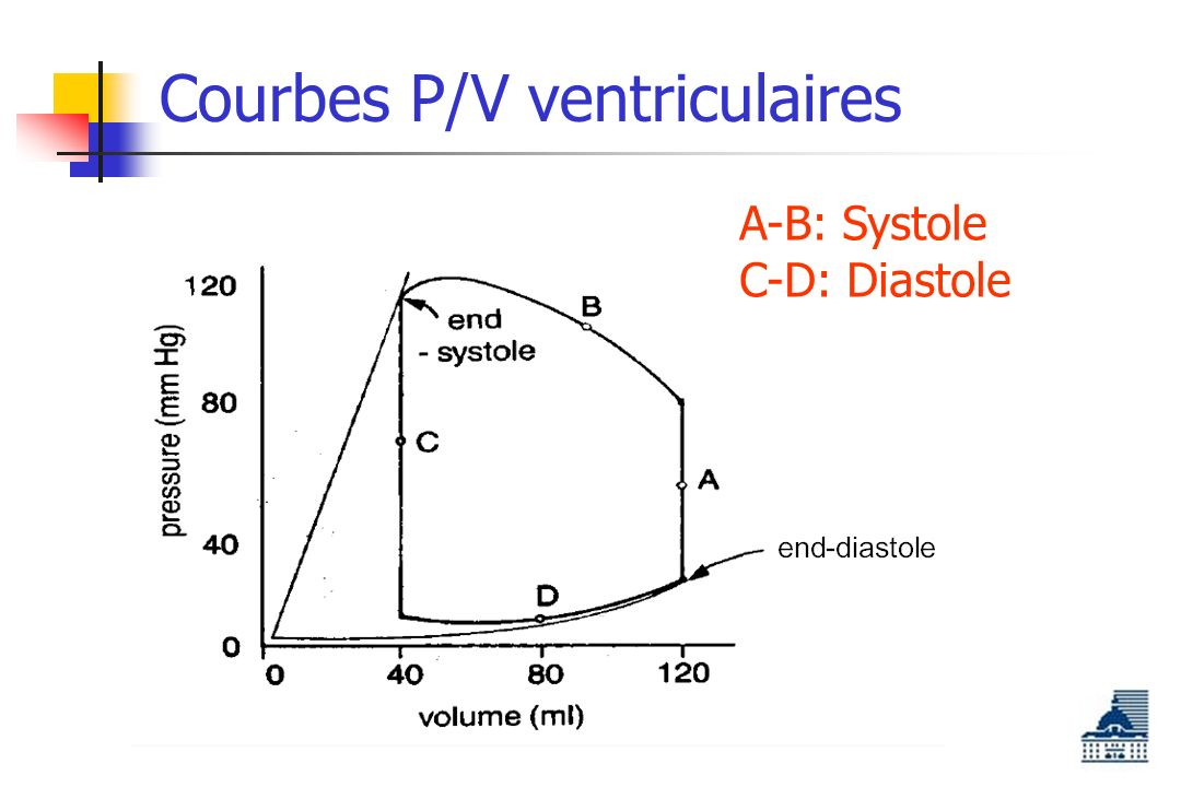 Courbes P/V ventriculaires