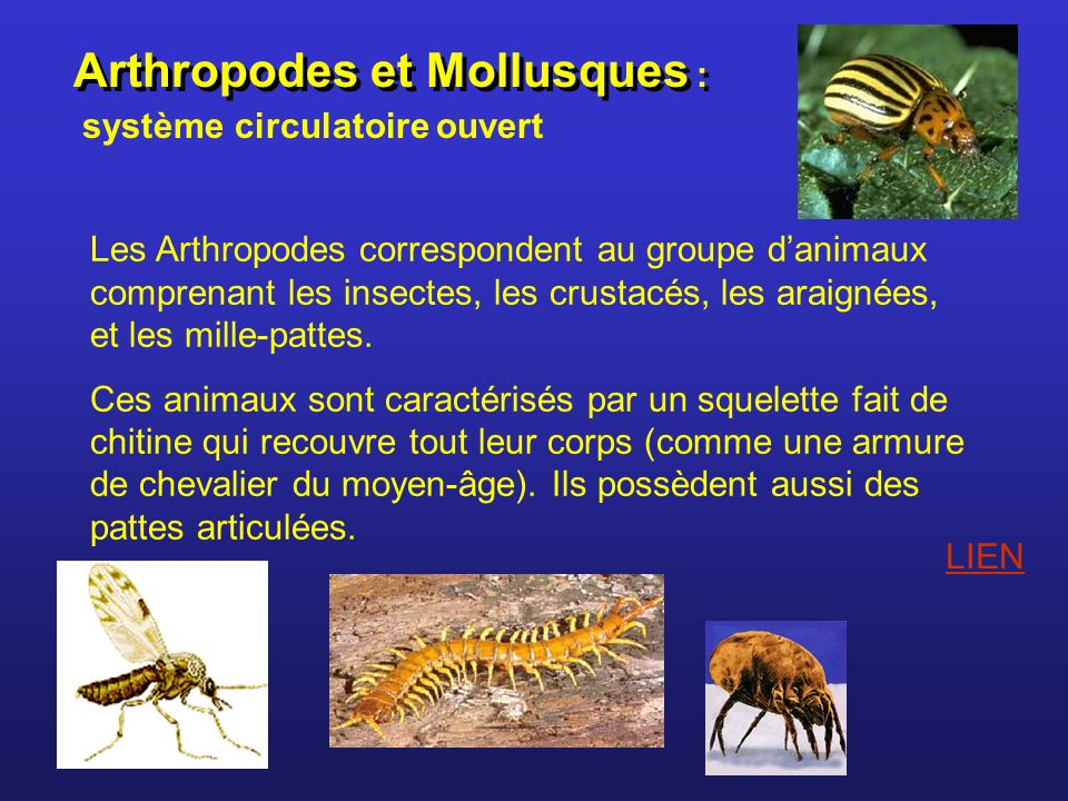 Arthropodes et Mollusques :