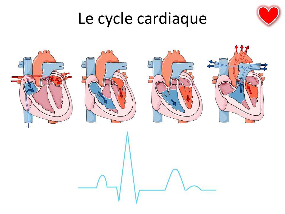 Le cycle cardiaque