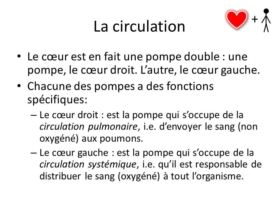 La circulation + Le cœur est en fait une pompe double : une pompe, le cœur droit. L'autre, le cœur gauche.