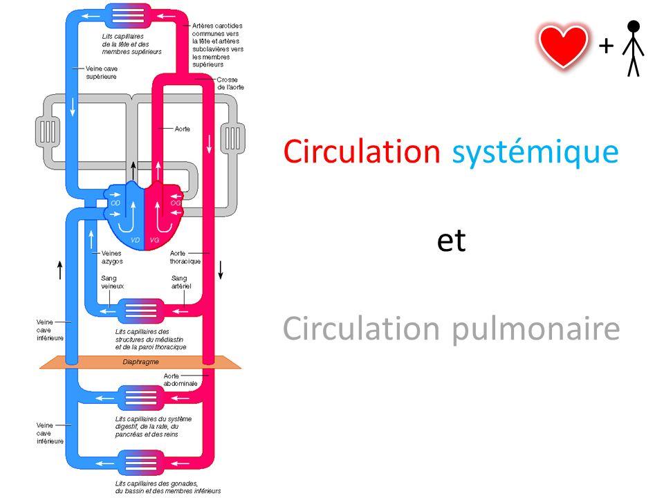 Circulation systémique et Circulation pulmonaire