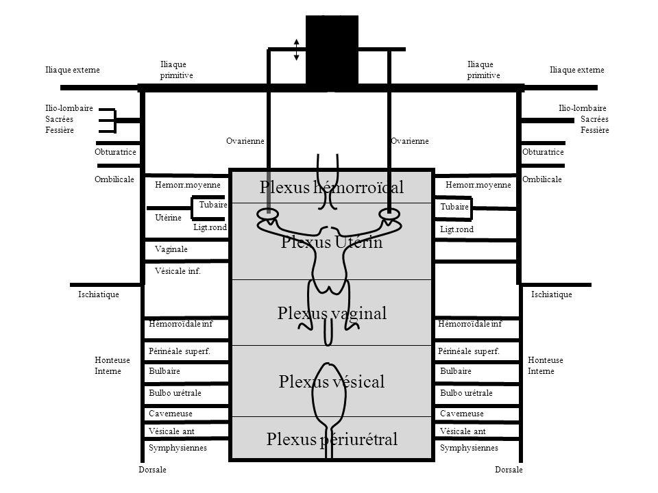 Plexus hémorroïdal Plexus Utérin Plexus vaginal Plexus vésical