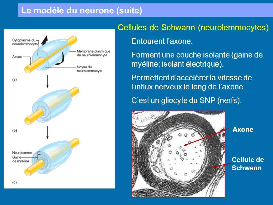 Le modèle du neurone (suite)