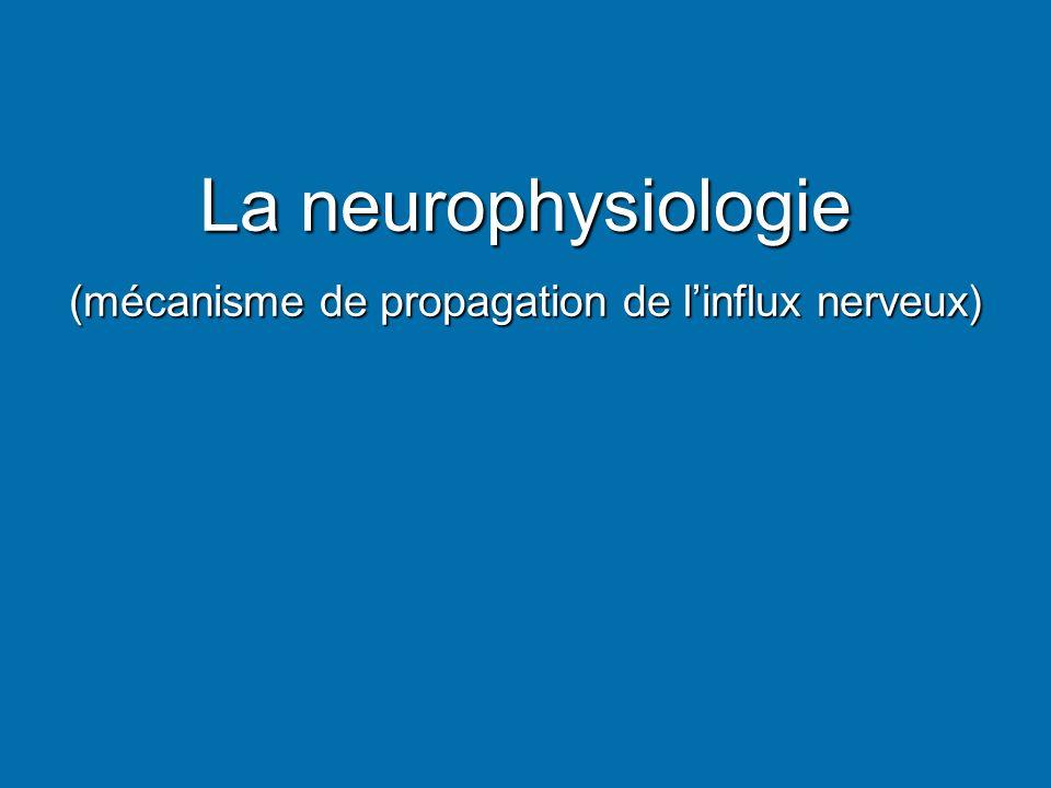 (mécanisme de propagation de l'influx nerveux)