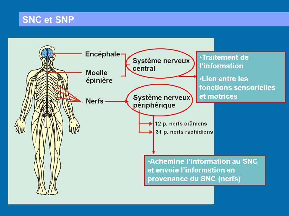 SNC et SNP Traitement de l'information