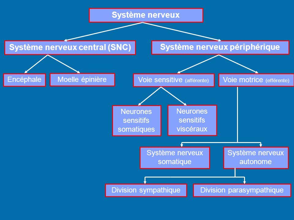 Système nerveux central (SNC) Système nerveux périphérique