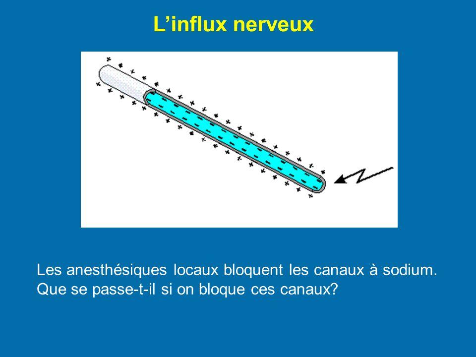 L'influx nerveux Les anesthésiques locaux bloquent les canaux à sodium.