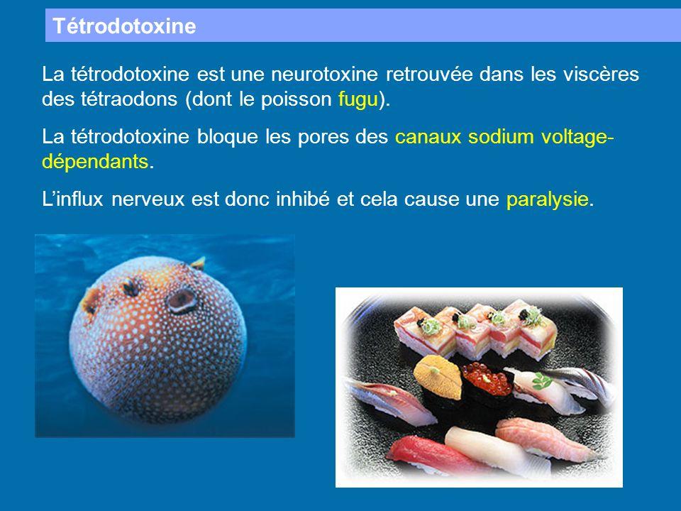 Tétrodotoxine La tétrodotoxine est une neurotoxine retrouvée dans les viscères des tétraodons (dont le poisson fugu).