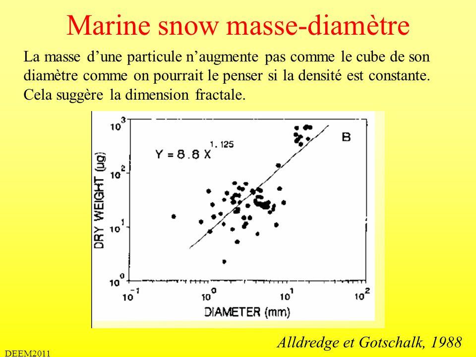 Marine snow masse-diamètre