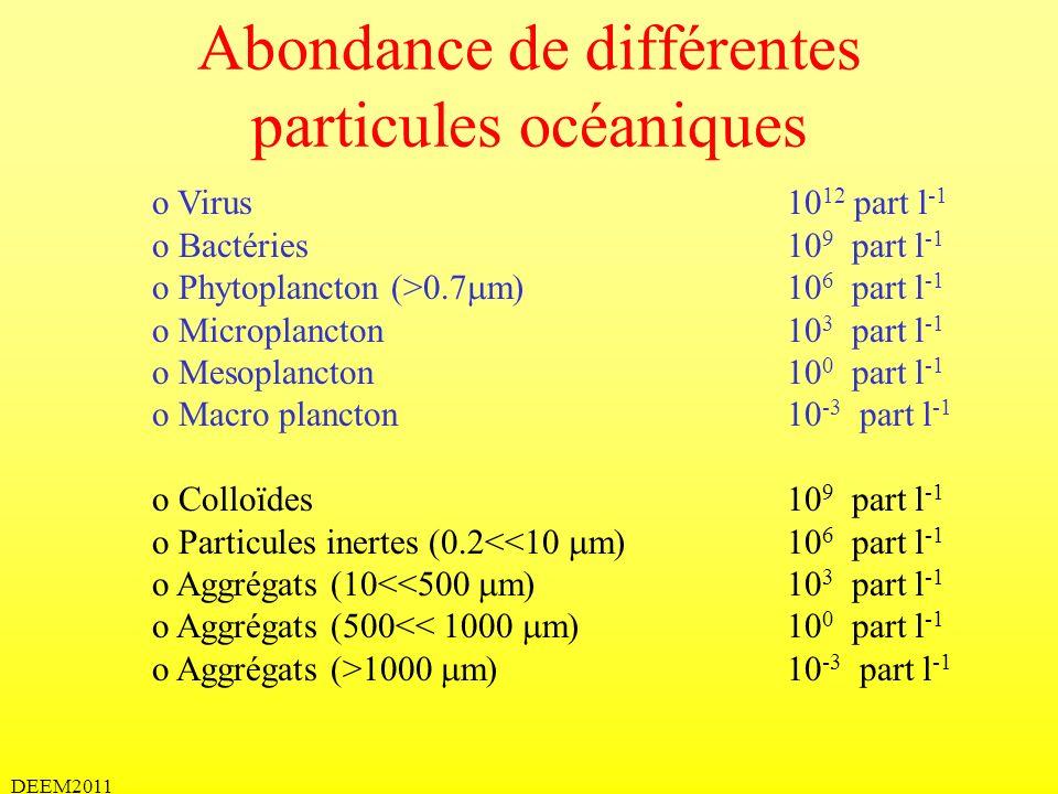 Abondance de différentes particules océaniques