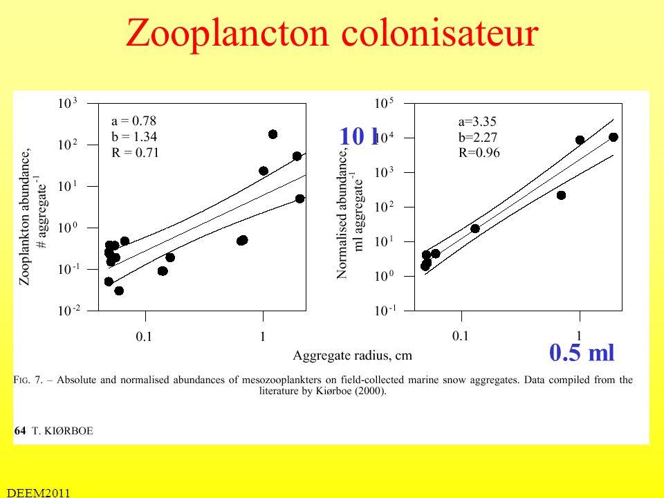 Zooplancton colonisateur