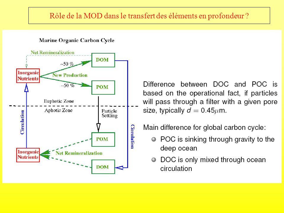 Rôle de la MOD dans le transfert des éléments en profondeur