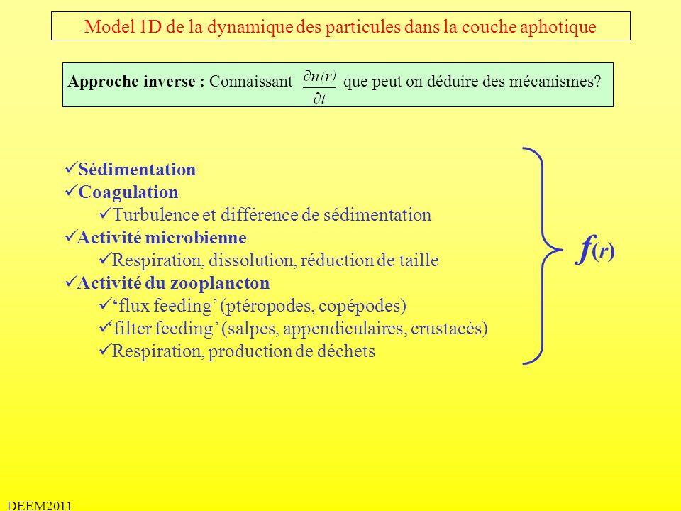 Model 1D de la dynamique des particules dans la couche aphotique