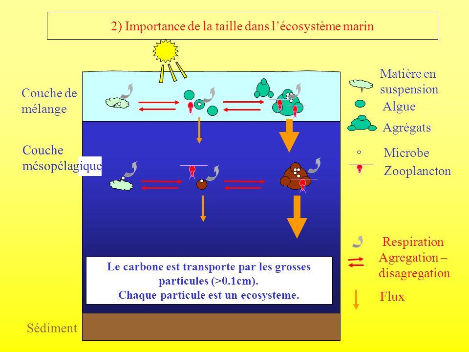 2) Importance de la taille dans l'écosystème marin