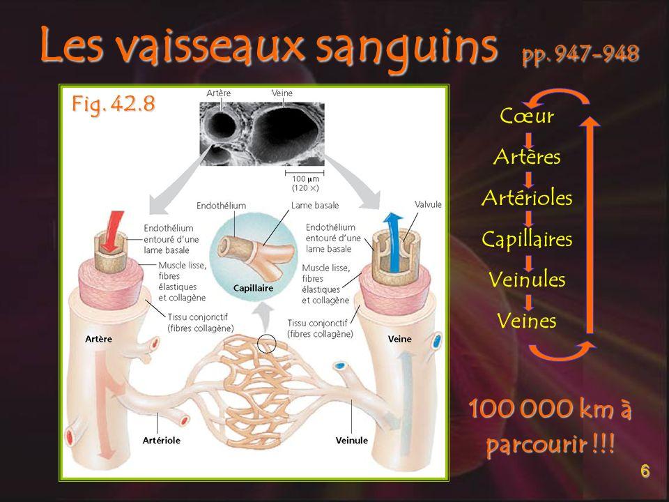 Les vaisseaux sanguins pp. 947-948
