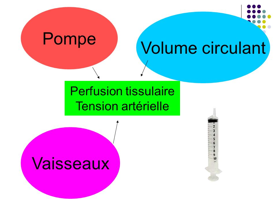Pompe Volume circulant Vaisseaux Perfusion tissulaire