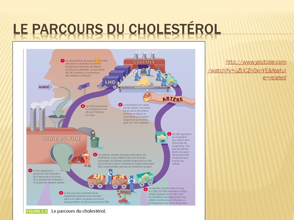 Le parcours du cholestérol
