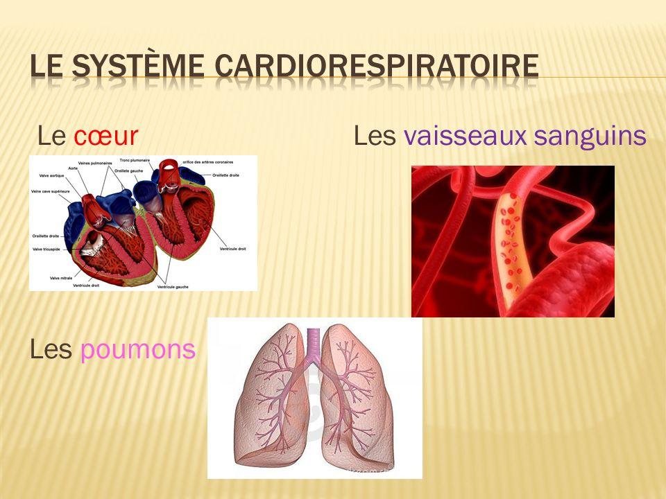 Le Système Cardiorespiratoire