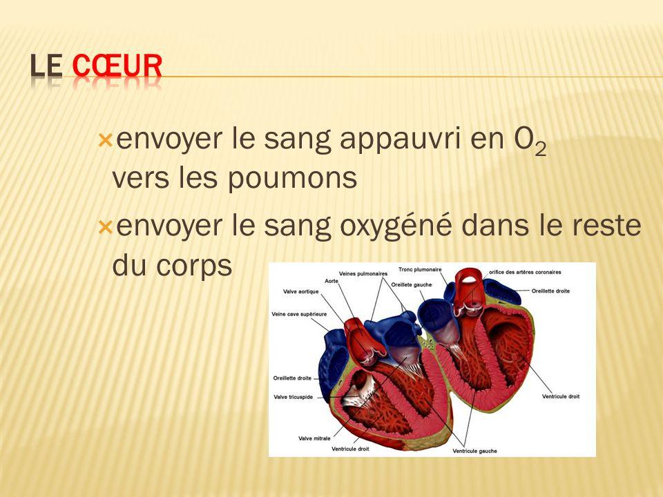 Le cœur envoyer le sang appauvri en O2 vers les poumons.