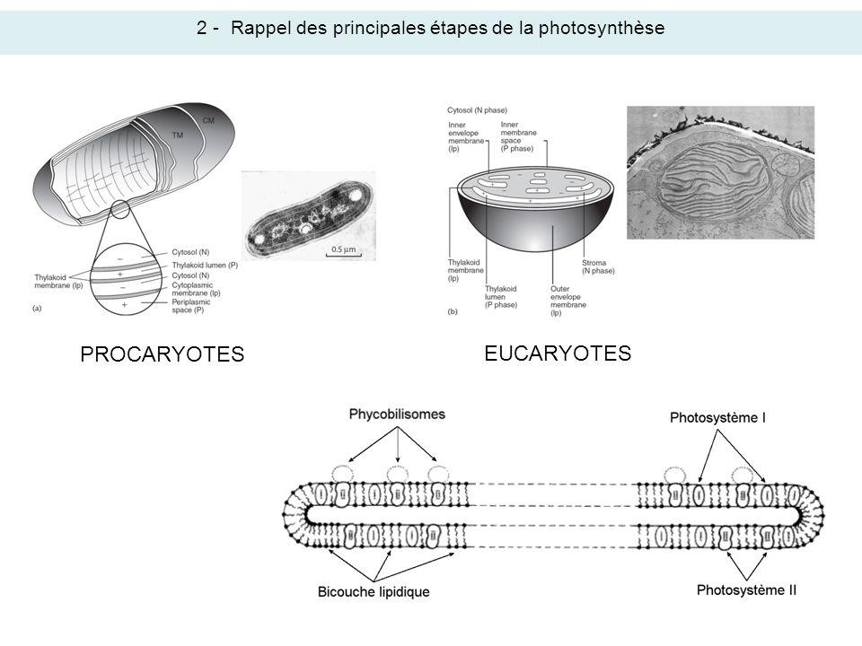 2 - Rappel des principales étapes de la photosynthèse
