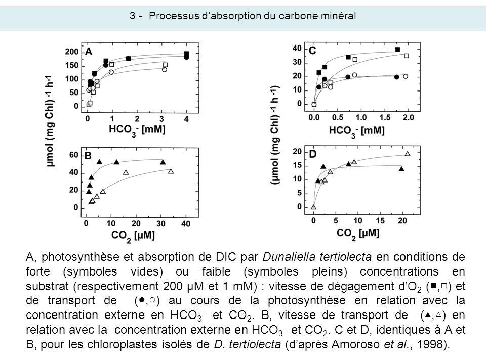 3 - Processus d'absorption du carbone minéral