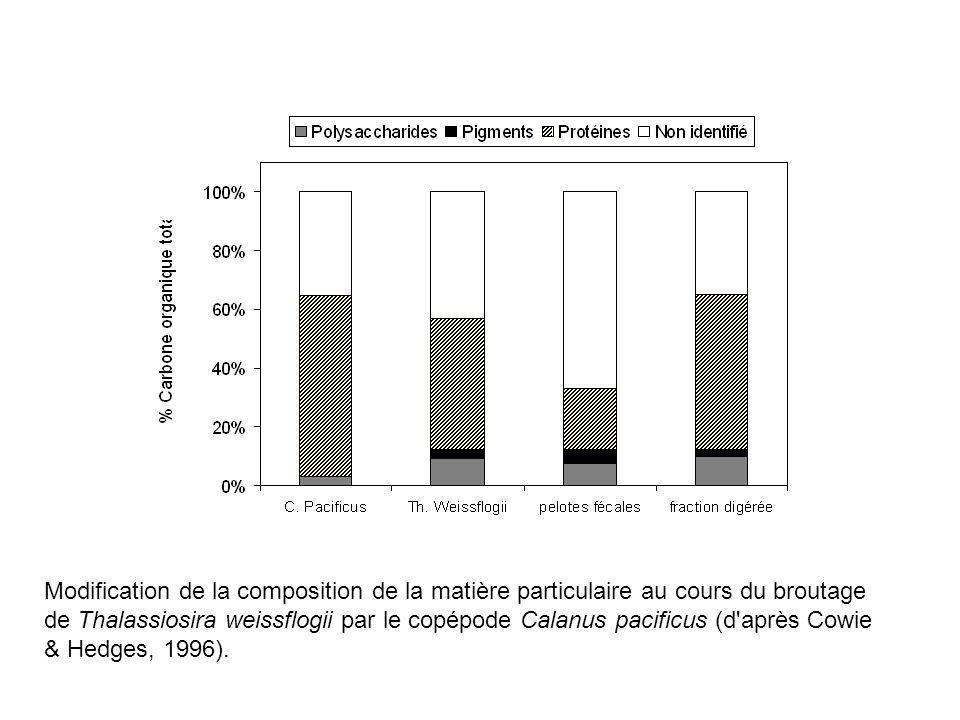 Modification de la composition de la matière particulaire au cours du broutage de Thalassiosira weissflogii par le copépode Calanus pacificus (d après Cowie & Hedges, 1996).