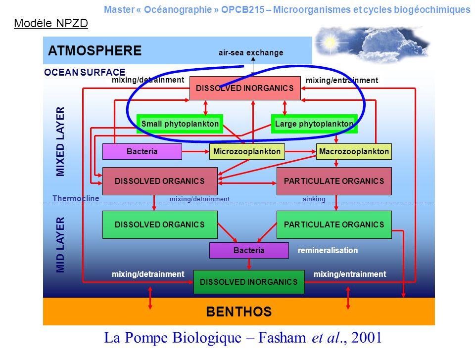 La Pompe Biologique – Fasham et al., 2001