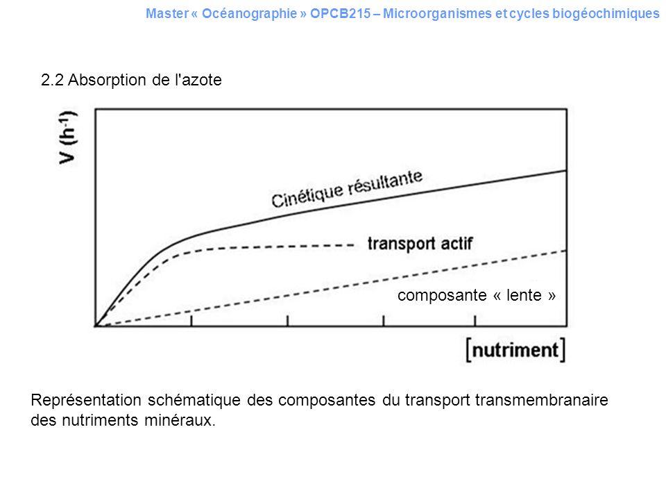 2.2 Absorption de l azote composante « lente »