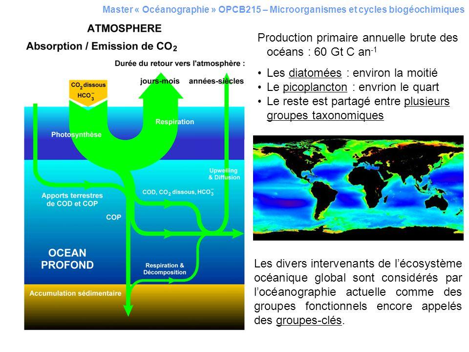 Production primaire annuelle brute des océans : 60 Gt C an-1