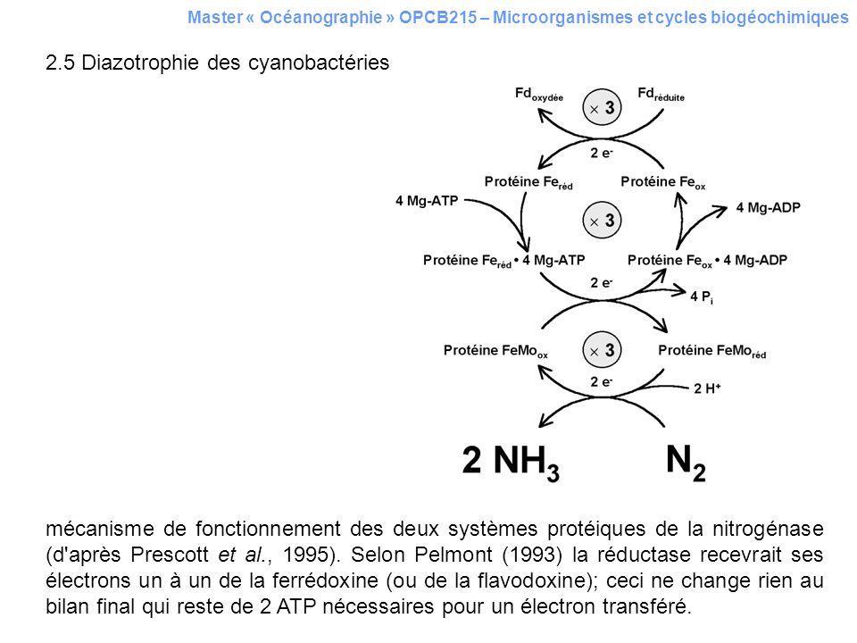 2.5 Diazotrophie des cyanobactéries