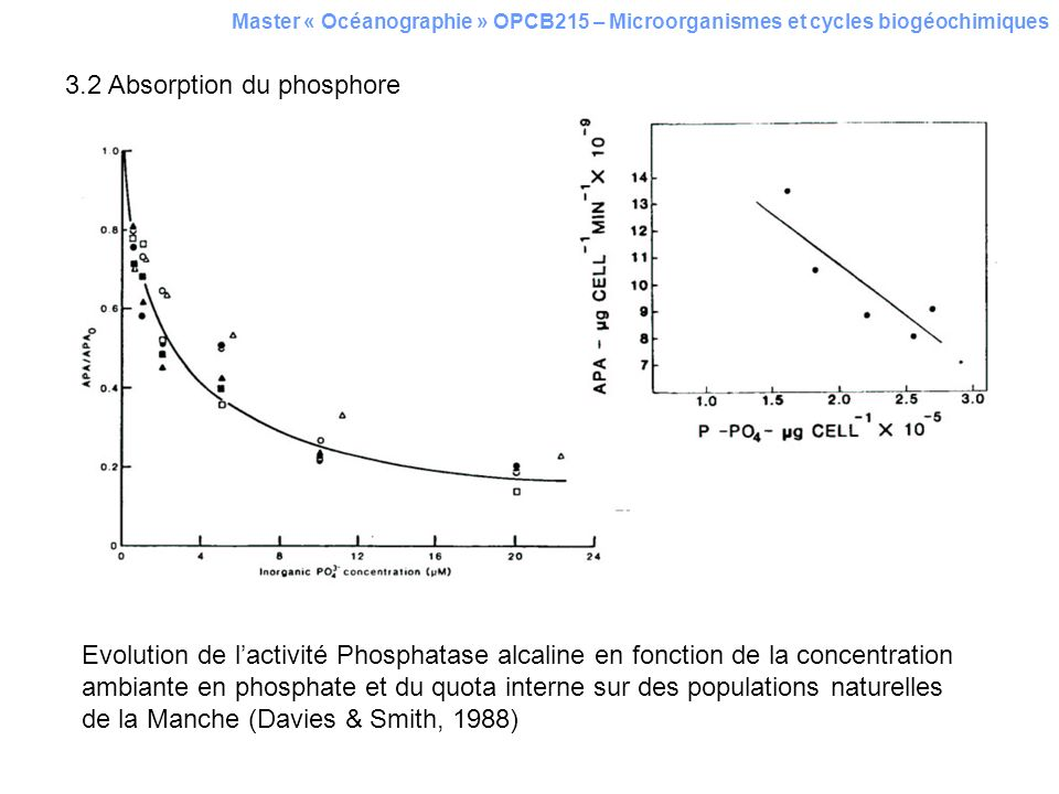 3.2 Absorption du phosphore
